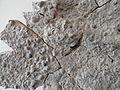 Fossil sea floor from Rottershausen - Mineralogisches Museum der Universität Würzburg - DSC02882.JPG