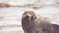 Friendly otter (Unsplash).jpg