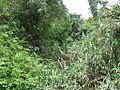 Frondoso - panoramio.jpg