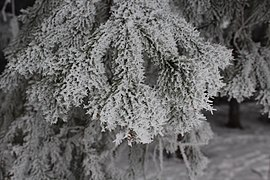 Frost4.jpg