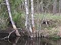 Full water in Roshinka river - panoramio.jpg