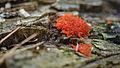 Fungus - Algonquin Provincial Park, Ontario.jpg