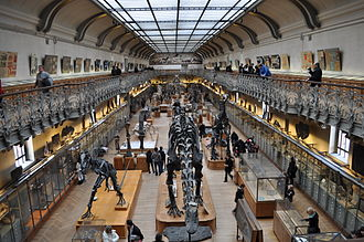 Gallery of Paleontology and Comparative Anatomy - Image: Galerie de paléontologie