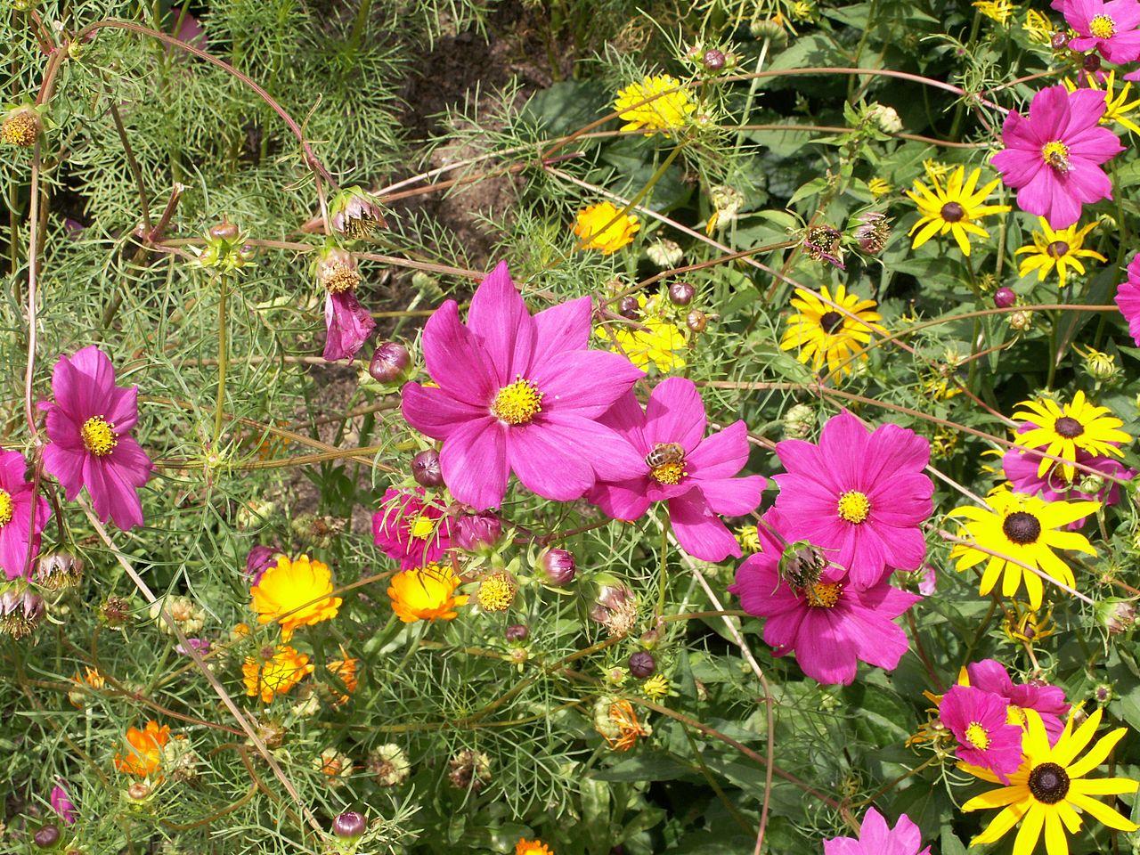 filegarden flowersjpg