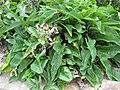 Gardenology.org-IMG 2765 rbgs11jan.jpg