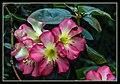 Gardens by the Marina Bay-49 (8332126801).jpg