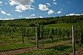 Gaspereau Vineyards Nova Scotia.jpg