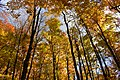 Gatineau Park, October 2018 (38) (31456314798).jpg