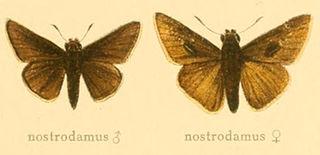 <i>Gegenes nostrodamus</i> species of insect