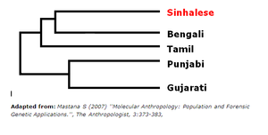 Genetic studies on Sinhalese - Genetic distance of Sinhalese to other ethnic groups in the Indian Subcontinent according to an Alu Polymorphism analysis.