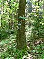 Geologischer Wanderweg Tharandter Wald (06).jpg