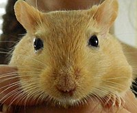 Gerbil Awesomness.JPG