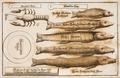 Goderfredus-Christianus-Leiserus-Jus-georgicum MG 1251.tif