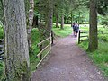 Gortin Glen Forest Park - geograph.org.uk - 1350774.jpg