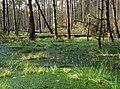 Grünen Sumpf - panoramio.jpg