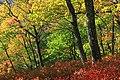 Gravel Family Nature Preserve (6) (30290164331).jpg
