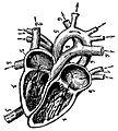 Grierson 15 Corazón.JPG