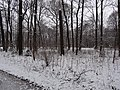 Großer Garten, Dresden in winter (1097).jpg