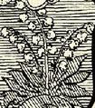 Gyögyvirág (heraldika).PNG