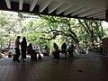HKU 香港大學 Sun Yat-Sen Lotus pool tree April 2019 SSG 03.jpg