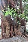 HK 上環 Sheung Wan 磅巷 Pound Lane Chinese banyan tree n letter box March 2019 IX2 03.jpg