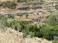 Hadassah Trail P1150408.JPG