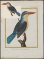 Halcyon cancrophaga - 1700-1880 - Print - Iconographia Zoologica - Special Collections University of Amsterdam - UBA01 IZ16800053.tif