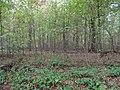 Hambach forest 63.jpg
