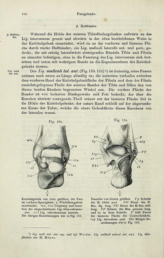 File:Handbuch der systematischen Anatomie des Menschen (Page 154 ...