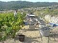 Harvesting grapes in the Minervois.jpg