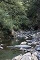 Hehuan River flows over rocks in green forest.jpg