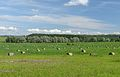 Heinamaa Rihkama külas (cropped).jpg