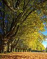 Herbst (1798699726).jpg