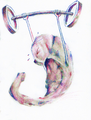 Hippocampus weights.png
