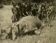 ugandan tribespeople with hippo slain for food early 20th century - Pictures Of Hippos
