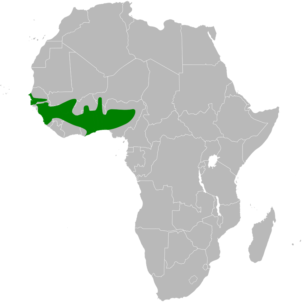 Hirundo leucosoma distribution map