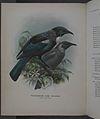 History of the birds of NZ 1st ed p086-2.jpg