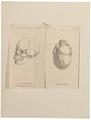 Homo sapiens - Ethiopië - 1700-1880 - Print - Iconographia Zoologica - Special Collections University of Amsterdam - UBA01 IZ19400029.tif