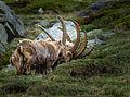 Horn fan (14387968389).jpg