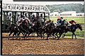 Horse Race Starting Gate (14304242538).jpg