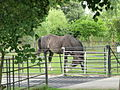 Horse and cattle grid, Layer Marney (geograph 2490757).jpg