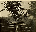 How to have bird neighbors (1917) (14747691251).jpg