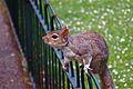 Hungry Little Bugger (542352902).jpg
