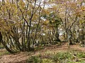Ibarakawacho, Higashiomi, Shiga Prefecture 527-0216, Japan - panoramio (26).jpg