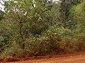 Iguaçu - panoramio (15).jpg
