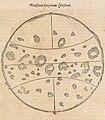 "Illustration of sunspots from ""Ars Magna Lucis et Umbrae"" 01.jpg"