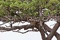 Impressions of Serengeti (37).jpg