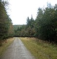 In the middle of Coed Cwm Kenfig - geograph.org.uk - 997866.jpg