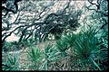 Inland forests at Cumberland Island National Seashore, Georgia (bca68982-928c-46b0-9316-961d353c1a4a).jpg