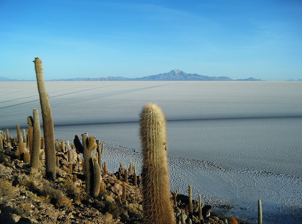 Isla Del Pescado, Salar De Uyuni, Bolivia (14289304652)